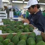 Sierra Exportadora: Cadenas productivas se potenciaron entre 2012 y 2015