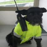 Facebook: Ñero, el perro policía que vigila Bogotá (VIRAL)