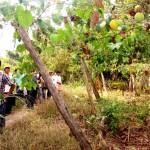Vraem: agricultores intercambian experiencias sobre granadilla