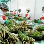 Sierra Exportadora benefició a más de 58 mil pequeños productores