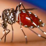 Virus del zika amenaza Paraguay junto al dengue y chikungunya