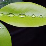 Soda de hojas de coca causa sensación en evento gastronómico