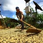 Devida apoya proyectos de desarrollo alternativo