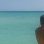 Alerta en Miami: detectan a más de cien tiburones cerca de las playas