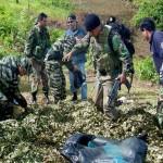 Perú logra récord al erradicar 30 mil hectáreas de hoja de coca