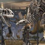 Reino Unido: Un dinosaurio de 155 millones de años sin comprador