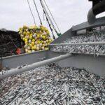 Anchoveta: Suspenden actividades extractivas en litoral