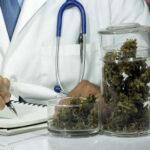 Uruguay: Promueven investigación del uso medicinal de la marihuana