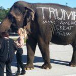Donald Trump utiliza elefante en campaña en Florida