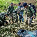 Destruyen más de 13.000 hectáreas de hoja de coca en la selva