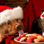 Navidad: 6 tips para cuidar a tu mascota en Fiestas