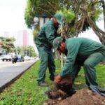 San Isidro planta 350 árboles en límites con Magdalena y Lince