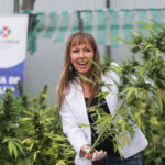 Cannabis: Autorizan elaboración de medicinas derivadas en Chile