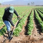 El Niño: INIA afrontará sequías en centro y sur del país