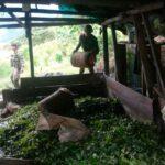 Colombia: Destruyen dos laboratorios de cocaína del ELN