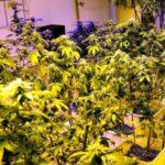 Holanda: Brabante factura 1,000 millones al año por marihuana