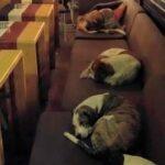 Facebook: Foto de perros durmiendo en cafetería es viral