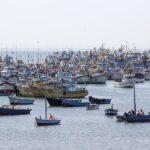 Suspenden pesca de anchoveta y anchoveta blanca por 5 días