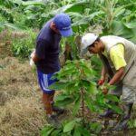 INIA presentan banco de semillas en Pucallpa