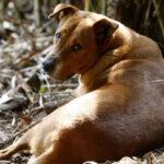 Camboya: Cuatro muertos y 30 intoxicados al comer carne de perro