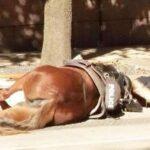 Facebook: Foto de policía con yegua moribunda se vuelve viral