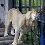 Animales silvestres: ¿Por qué evitar criarlos como mascotas?