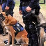 "Vigilan a Joaquín Guzmán con perros ""huele-Chapo"""