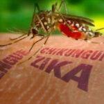 EEUU: Científicos piden a la OMS acciones rápidas contra el zika