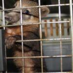 Junín: Serfor y Policía rescatan animal silvestre en carretera