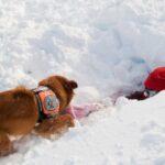 Canadá: Cinco personas mueren por avalancha en Columbia Británica