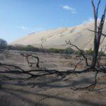 Nasca: Incendio forestal se registró en el bosque seco de Usaca