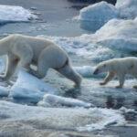 Deshielo del Ártico: una amenaza a la seguridad y la salud global