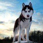 Perro doméstico tuvo origen hace 33,000 años en sureste de Asia