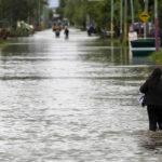 Argentina: Plaga de lagartos, arañas y culebras por cambio climático