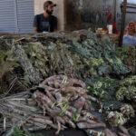 Paraguay: Plantas medicinales irrumpen en lucha contra el dengue