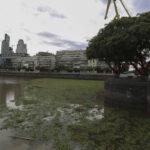 Alfombra de plantas acuáticas vuelve verde el Río de la Plata