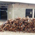 Sechura: Municipio y comuneros se unen contra tala ilegal