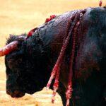 Gobierno da ley contra maltrato animal que no incluye corrida de toros