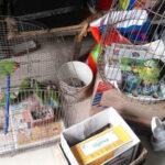 Huaral: Condenan a comerciantes por vender animales silvestres