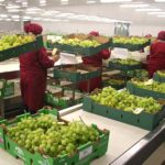 Agroexportaciones superarán los US$6,000 millones este año