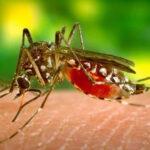 EEUU: Confirman tres casos del virus Zika en el estado de Florida