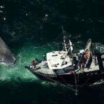 Japón: Barco choca con una ballena al sur de Tokio