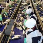 Perú es el principal exportador mundial de harina de pescado