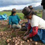 Minagri: Producción agropecuaria aumentó 2.8% el 2015