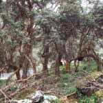 Serfor: Bosques de Oyón son prioridad para la conservación