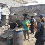 VMT: Realizan operativo en criadero de cerdos