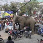 India: Elefante entra en un pueblo y mata a un hombre
