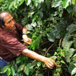 Sierra Exportadora generó más ventas en Macro Región Centro