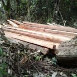 Iquitos: Sernanp recupera lote de madera