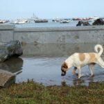Municipalidad de Ventanilla cierra playas por fuertes oleajes